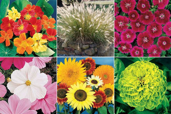 Seed Catalogs Are Out, (check Our Post On Our Seed Catalog Recommendations)  And Soon Dedicated Gardeners Will Be Choosing What Plants To Grow This Year  From ...