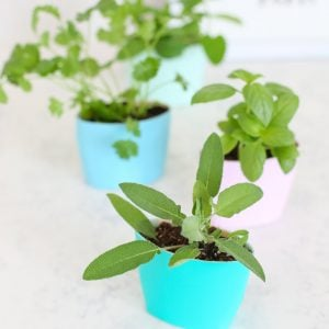 14 Brilliant DIY Indoor Herb Garden Ideas