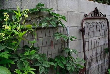 Diy Garden Trellis Projects | The Garden Glove
