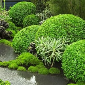 Garden Design : Using Texture in the Garden