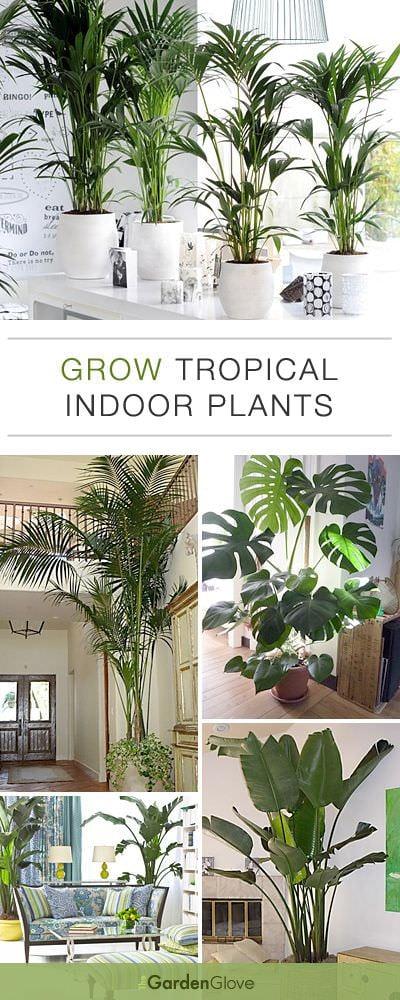 tropical home decor ideas popsugar home.htm grow tropical indoor plants the garden glove  grow tropical indoor plants the