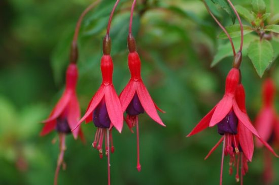 Perennials For Shade That Bloom All Summer
