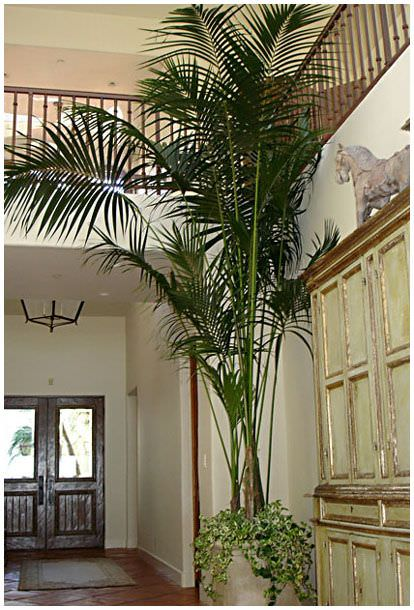 Grow tropical indoor plants the garden glove for Planta tropical interior