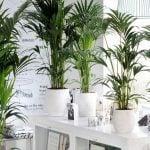 Grow Tropical Indoor Plants
