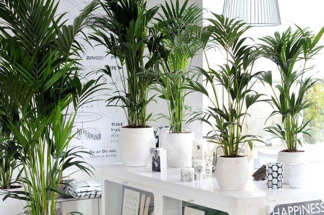 Grow tropical indoor plants the garden glove - Plantas tropicales de exterior ...
