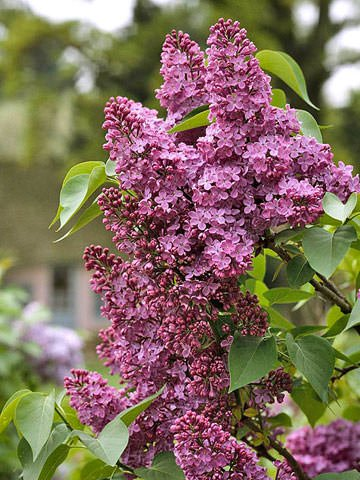 Tgg S Fav Fragrant Flowers The Garden Glove