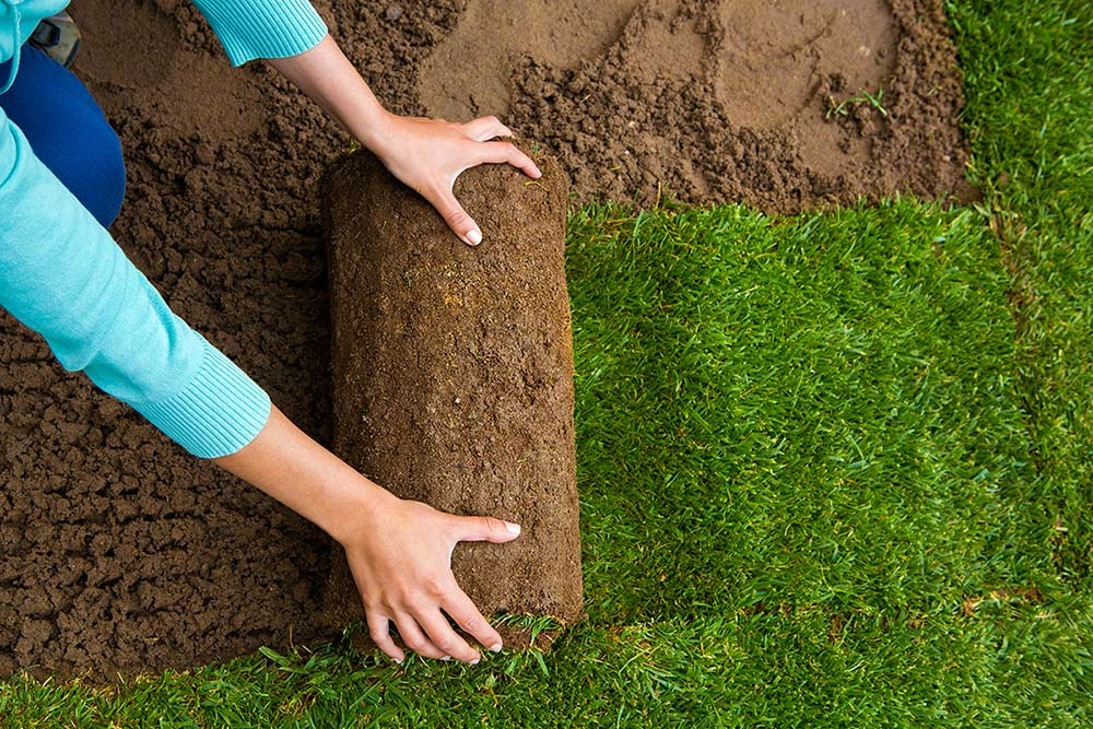 How To Lay Sod In 6 Easy Follow Steps The Garden Glove