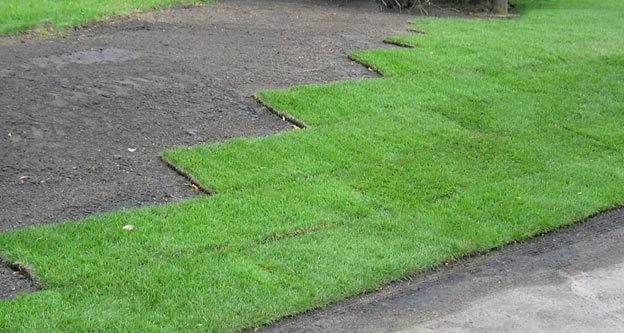 How to Lay Sod in 6 Easy to Follow Steps | The Garden Glove
