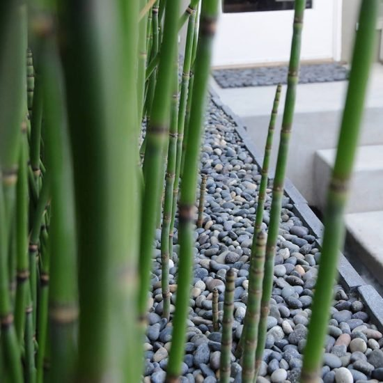 Using Architectural Plants in the Garden