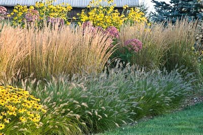 Using architectural plants in the garden the garden glove for Ornamental grass bed design