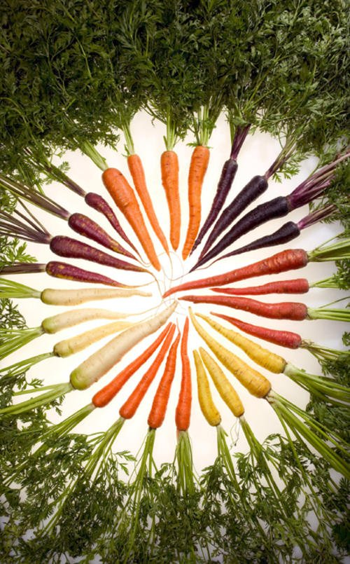 carrots_of_many_colors_2