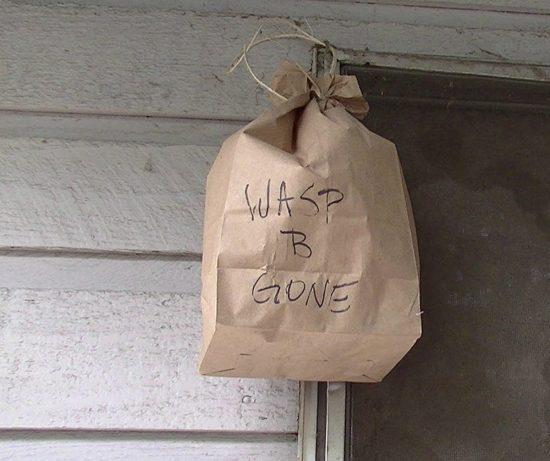 DIY Backyard Wasp Solutions