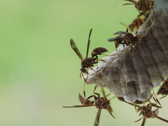 DIY Wasp Traps & Solutions for the Backyard