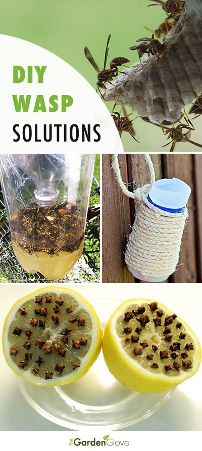 DIY Backyard Wasp Traps & Solutions