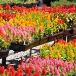 Fix for Fall : Easy Annuals to Wake Up your Garden