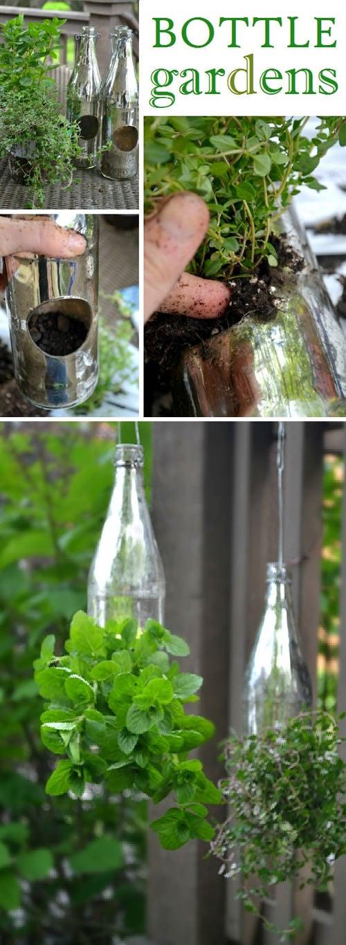 bottle-gardens