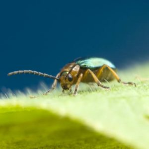 10 Summer Pests