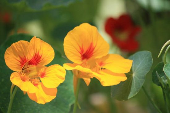 Easy Annuals to Wake Up your Garden