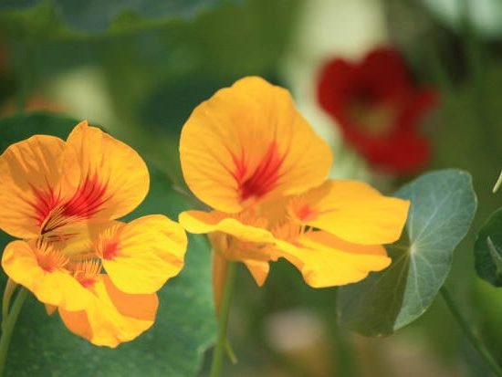 Easy Fix for Fall : Flowers to Wake Up your Garden