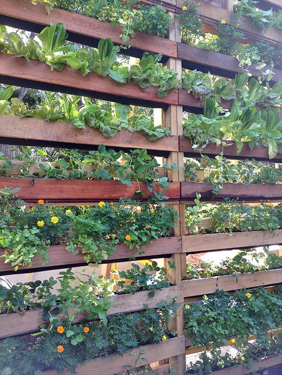 Diy patio privacy screens the garden glove for Garden screening ideas
