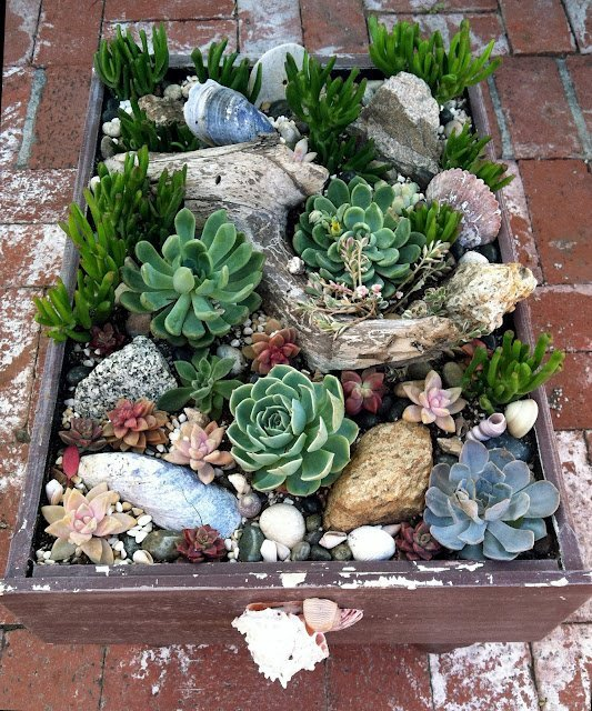 Sedum Projects Amp Diy Succulent Planters The Garden Glove
