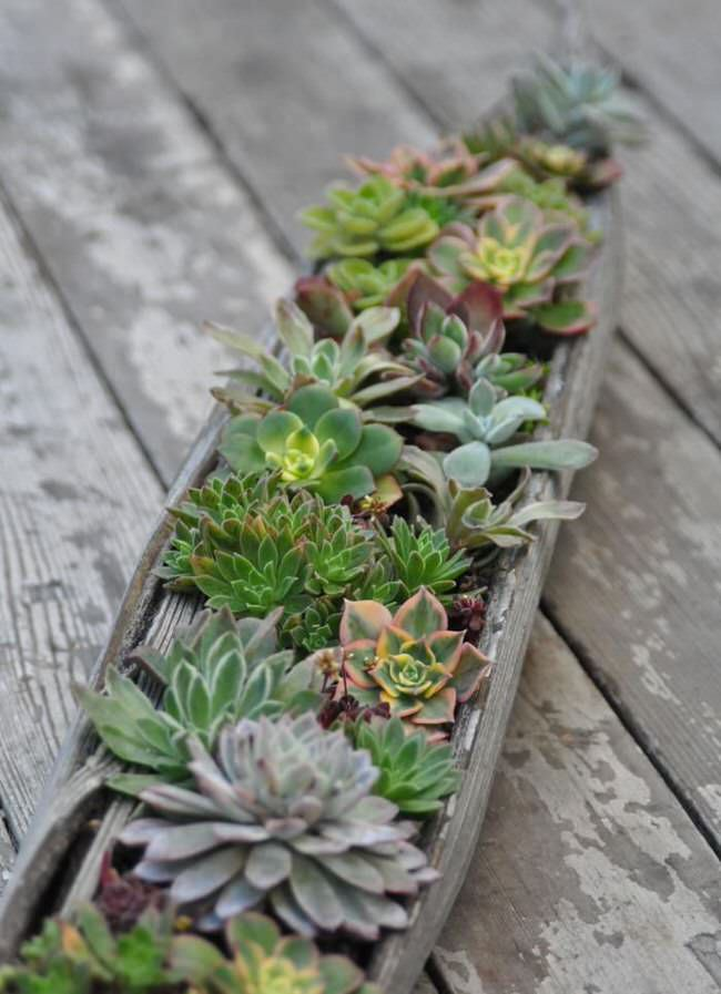 Sedum and Succulent Planters  The Garden Glove