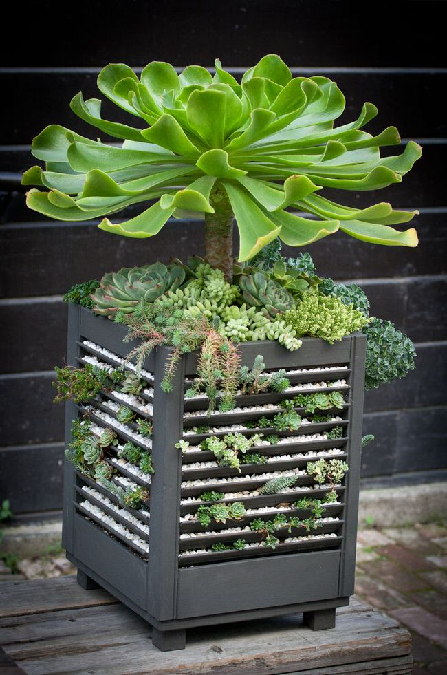 Planter Garden Ideas Sedum projects diy succulent planters the garden glove 5d1d7e08c0ff07e9cfb522db7d353c05 workwithnaturefo