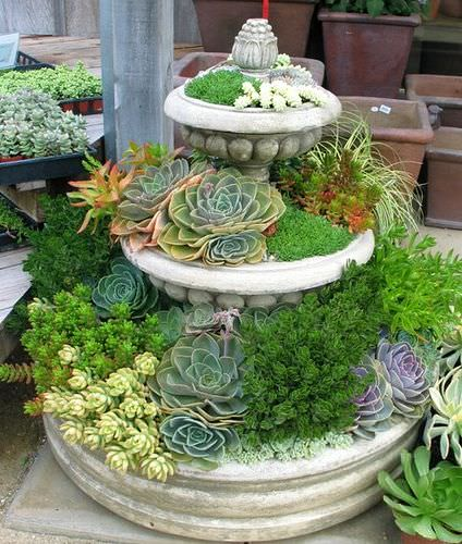 Sedum and succulent planters the garden glove for Garden design using succulents