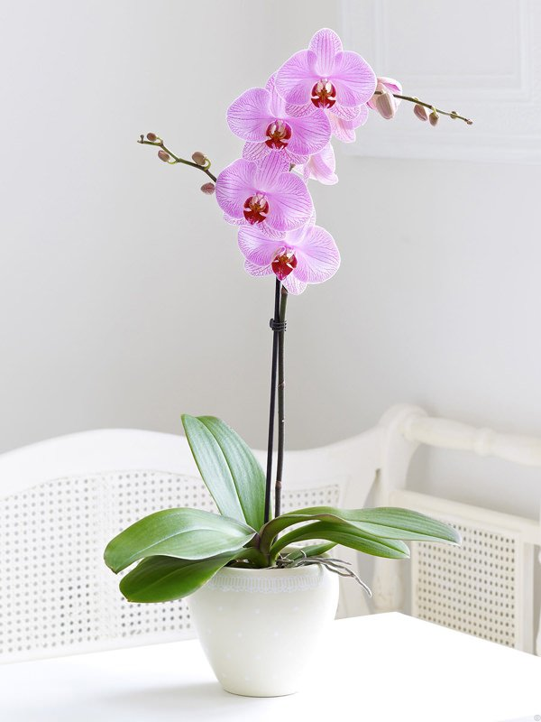 best orchid house plants. How to Grow Orchids  The Garden Glove