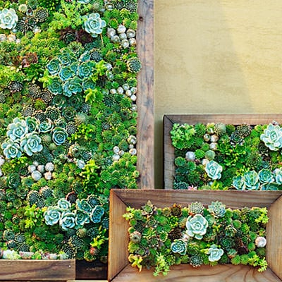 succulent-art-0210-l