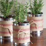DIY Christmas Plant Gift Projects