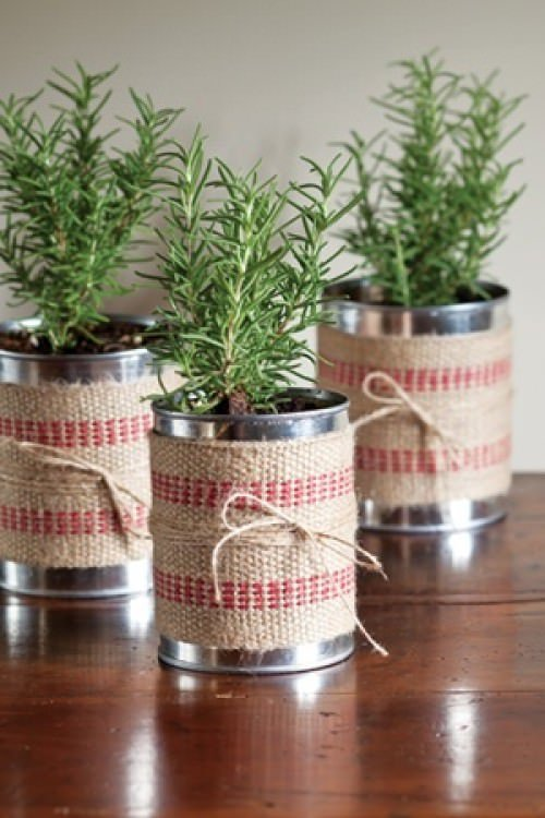 Tin Can Gift Plants- DIY Holiday Gift Plant Projects