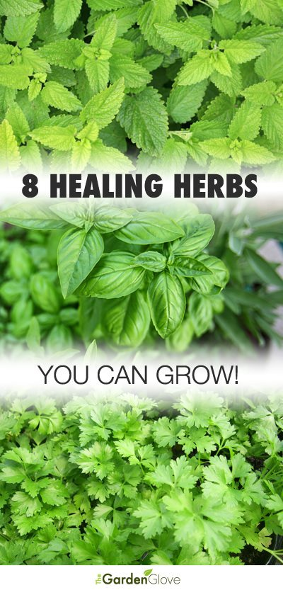 Must grow medicinal herbs
