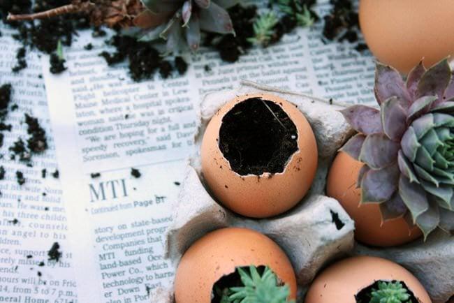 Eggshells3-ED