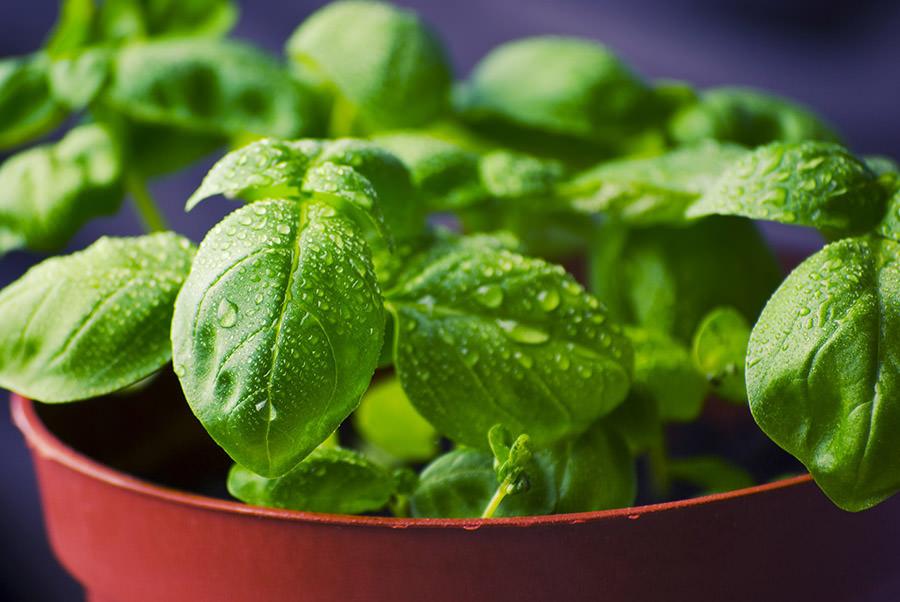 8 Healing Herbs to Grow in Your Garden
