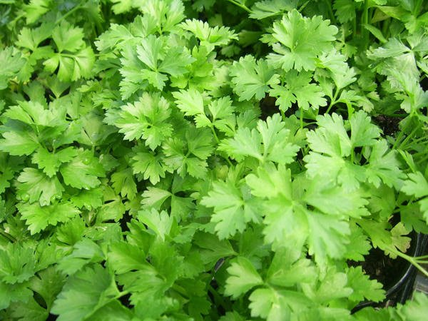 8 Healing Herbs You Can Grow