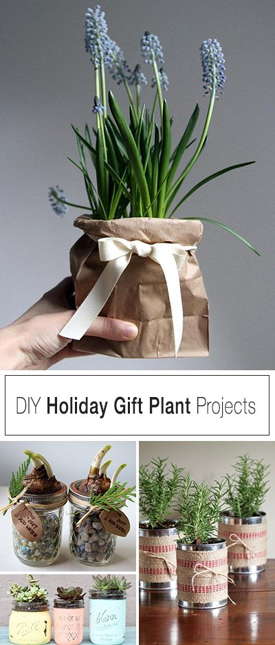 holiday-gift-plant-projects Home Depot Mini Plants on mini home design, mini home office, mini home garage, mini home bus, mini hp, mini walmart, mini home construction, mini home development, mini home silo, mini mcdonald's, mini home hotel,