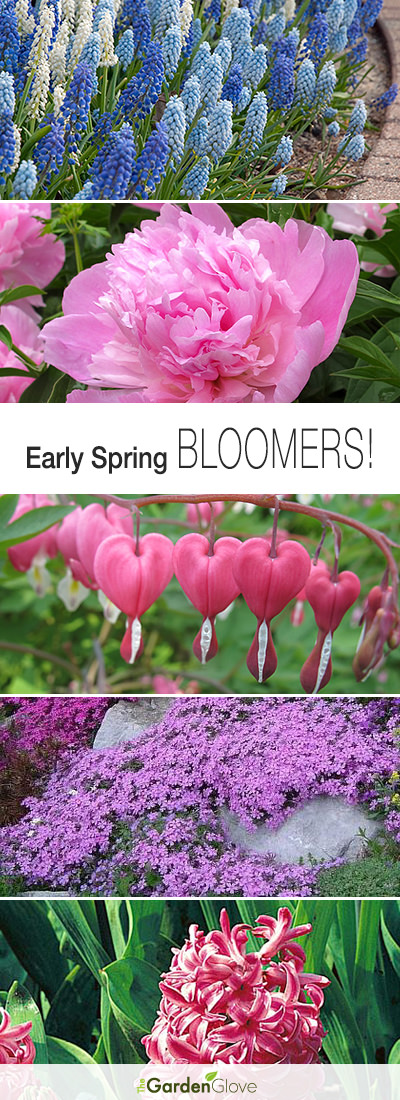 Early Spring Bloomers