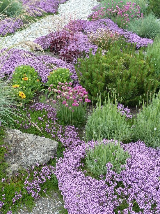 Great Groundcovers! | The Garden Glove