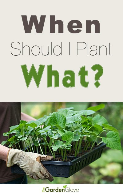 When should I plant what