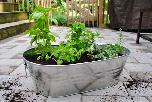 insanely cool herb garden container ideas | the garden glove