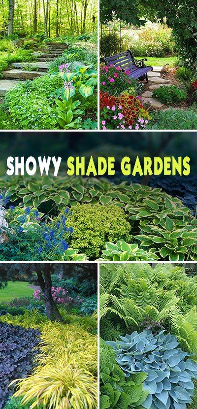 Showy Shade Garden Ideas The Glove