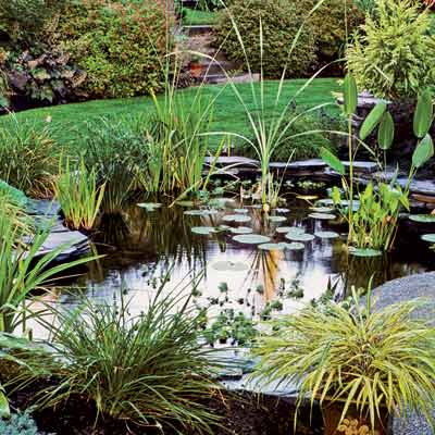 Perfect pond plants the garden glove for Outside pond plants