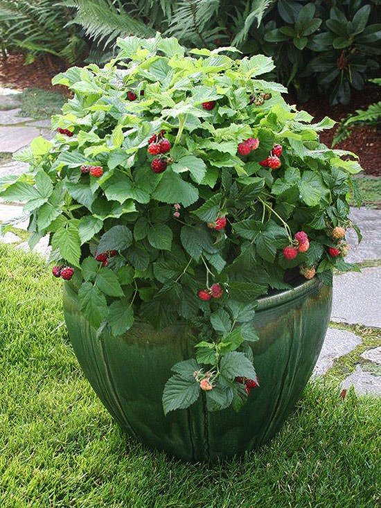 Best Unexpected Plants You Can Grow in Containers • The ...