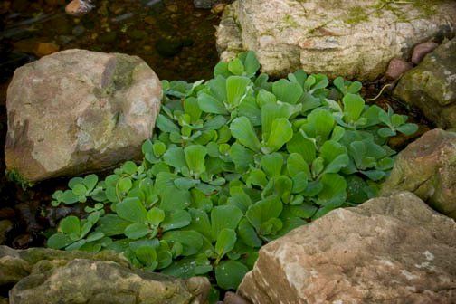 Perfect Pond Plants