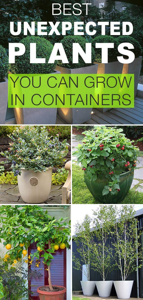 Always Match The Size Of Container To Plants Especially Large Nothing Makes A Garden Fail Faster Than Outgrowing It S