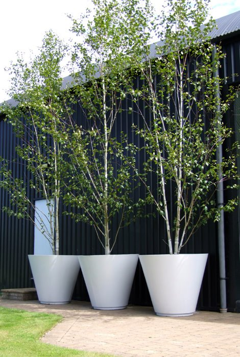planting-a-Silver-birch-architectural