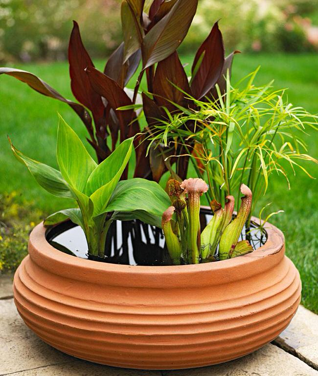 Easy diy container water gardens the garden glove for Planting pond plants in containers