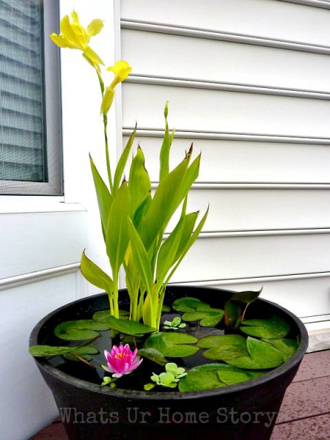 DIY-Container-Water-Garden2