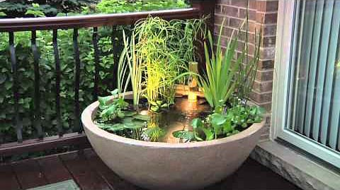DIY container water gardens - 12